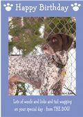 "German Short Haired Pointer-Happy Birthday - ""From The Dog"" Theme"